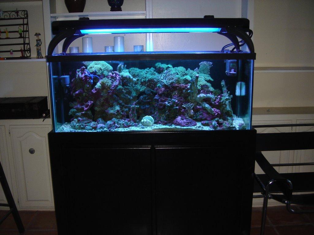 Saltwater aquarium 55 gallon 55 gallon saltwater for 55 gallon fish tank setup